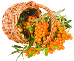 nature&Sea buckthorn png image.