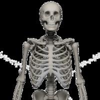 people & skeleton free transparent png image.
