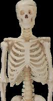 Skeleton&people png image