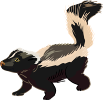 animals&Skunk png image.
