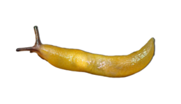 insects&Slug png image.