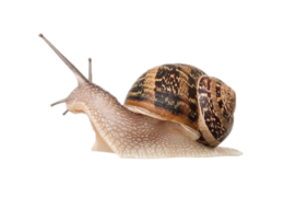 animals&Snails png image.