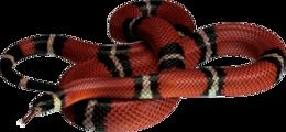 animals&Snake png image.