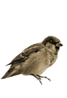 animals&Sparrow png image.