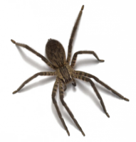 insects&Spider png image.
