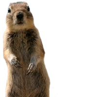 animals&Squirrel png image.
