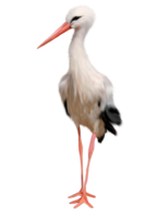animals&Stork png image.