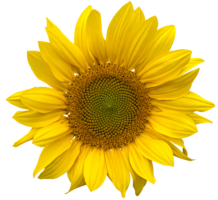 flowers&Sunflower png image.