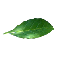 nature&Tobacco png image.