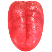 people&Tongue png image.