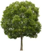 nature&Tree png image.