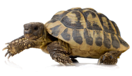 animals&Turtle png image.