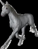 fantasy&Unicorn png image.