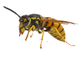 insects&Wasp png image.