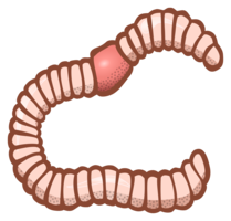insects&Worms png image.