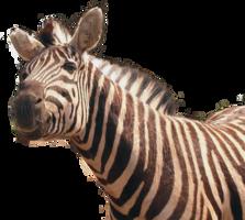 animals&Zebra png image.